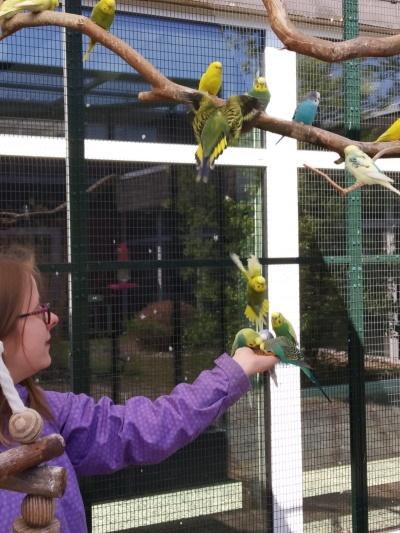 Mädchen in Vogelvoliere